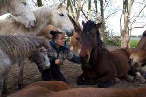 Norma-paarden-4